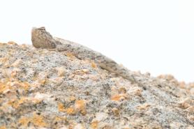 Looks its a rock